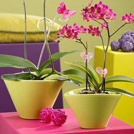 6 najneobičnijih i najljepših posuda za orhideje