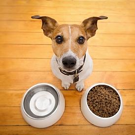9 bästa holistiska hundmat