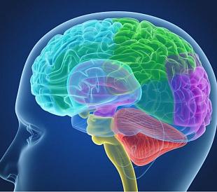 13 najboljih lijekova za mozak