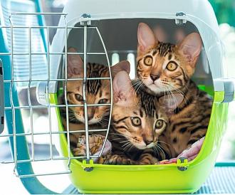 8 bästa kattbärare